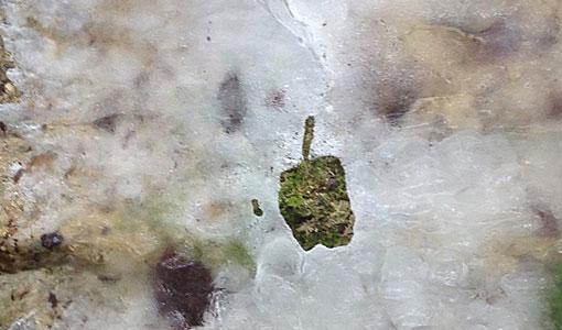 Apple-on-Ice